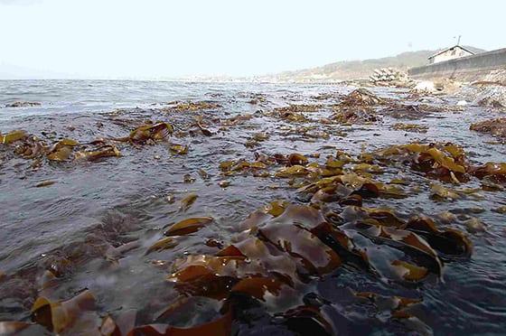 Iron-rich residue as an underwater fertilizer